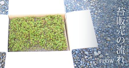 いのせ園芸の苔(コケ、こけ)販売の流れ
