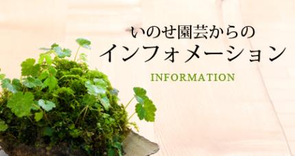 いのせ園芸から苔庭、苔(コケ・こけ)のインフォメーション