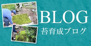 コケ育成ブログ